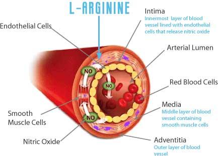 L-Citrulline vs  L-Citrulline DL-Malate: Which Is Best
