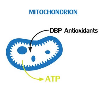 DBP Antioxidants and ATP