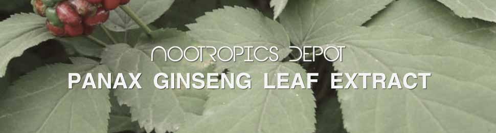 Buy Panax Ginseng Leaf