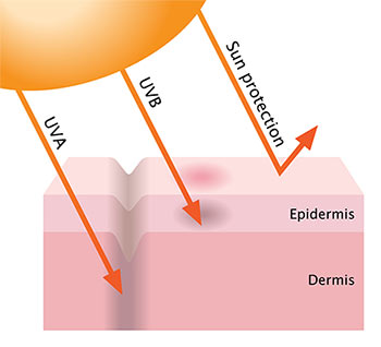 How the Sun's UVA and UVB Rays Affect Skin Health
