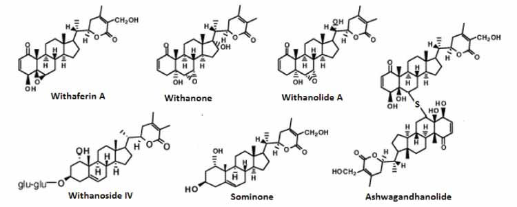 Withanolides Structure